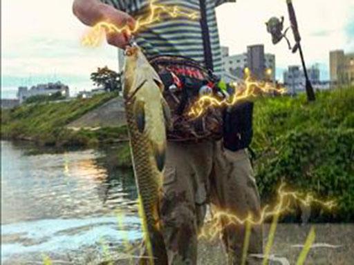 鯉をスプーンで釣った