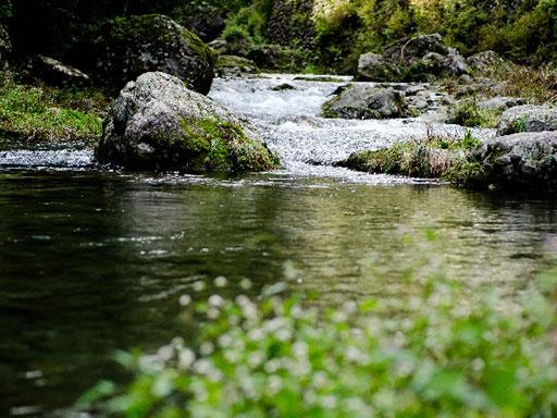 渓流の風景